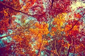 autumn-trees-tumblr-wallpaper-3