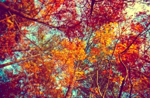 autumn-trees-tumblr-wallpaper-3
