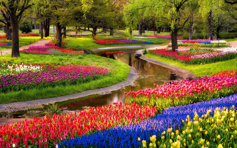 Colorful-garden-flowers-hd-wallpaper